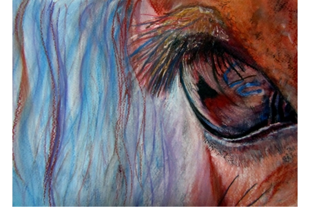 Horses Eye Close Up Print