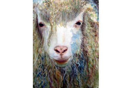 Long Haired Sheep Print
