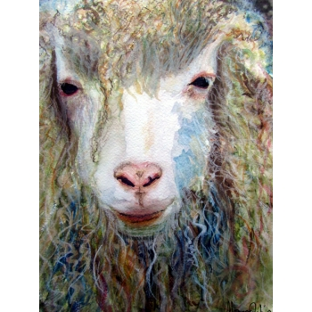 Long Haired Sheep ..