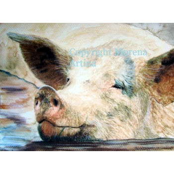 Pig in Muck Giclee..