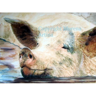 Pig in Muck Giclee Print
