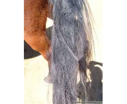 Matted Pet Hair Remover  For Horses