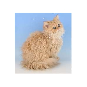 Matted Pet Hair Remover For Cats