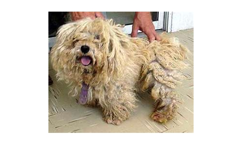 Matted Dog Hair Detangler