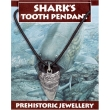 Shark's Tooth Pendant
