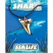 Shark Tooth Pendant - G..