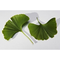 Bookmark 'Ginkgo', gold-plated
