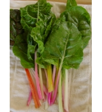 Swiss Chard, mixed colors
