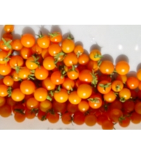 OP Gold Cherry Tomato