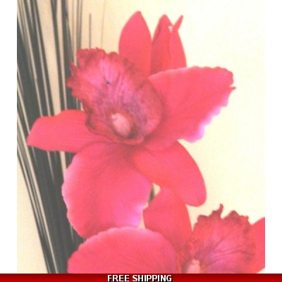 RICH PINK LARGE ORCHID FLOWER DISPLAY