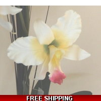 CREAM IVORY LARGE ORCHID FLOWER D..