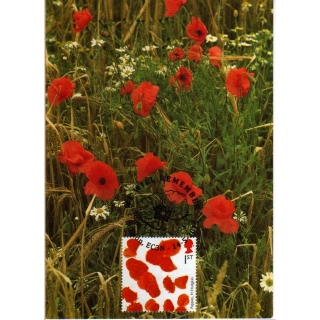 3711mx5 Poppy maximum card.