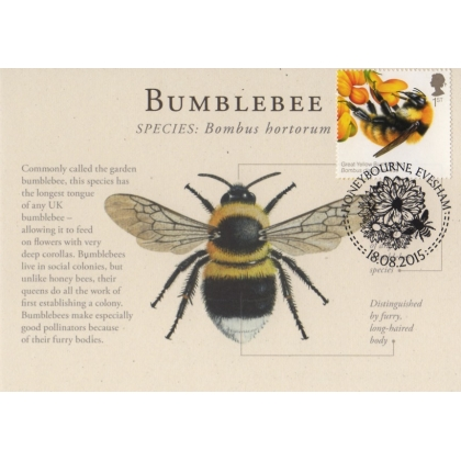 3738x1 British Bees 1st class Bumblebee maximum card
