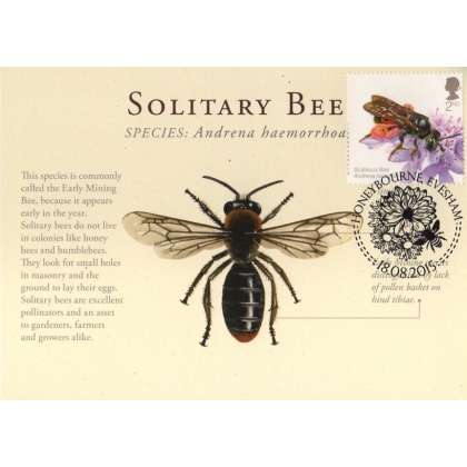 3737x British Bees 2nd class Solitary Bee maximum card