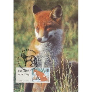 3777x1 Red Fox Maximum Card