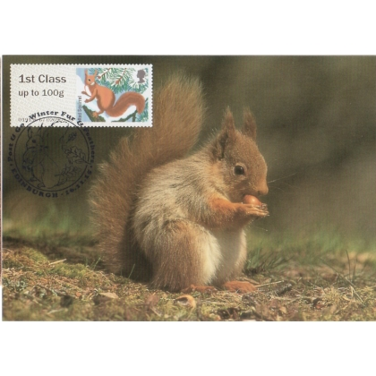 3778x3 Red Squirrel Maximum Card