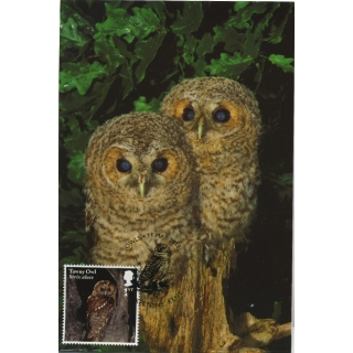 4087x Tawny Owl maximum card 2018
