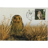 4083x Short-eared Owl maximum card 2018