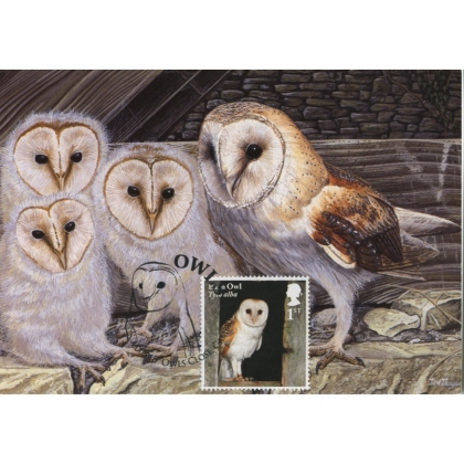 4080x8 Barn Owl maximum card 2018