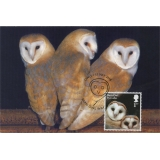 4085x5 Barn Owl juvenile maximum card ..