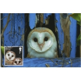 4085x6 Barn Owl juvenile maximum card ..