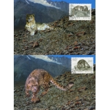 CH1 Snow Leopard maximum cards x 2 Peo..