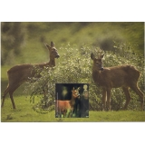 2480 Woodland Animals Roe Deer Maximum..