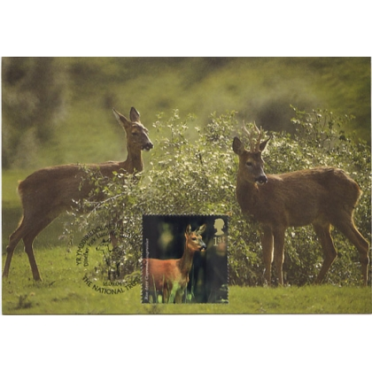 2480 Woodland Animals Roe Deer Maximum Card