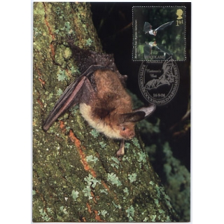 2486 Woodland Animals Bat Maximum Card
