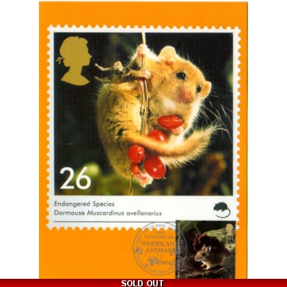2482 Woodland Animals Yellow-necked mouse Maximum Card