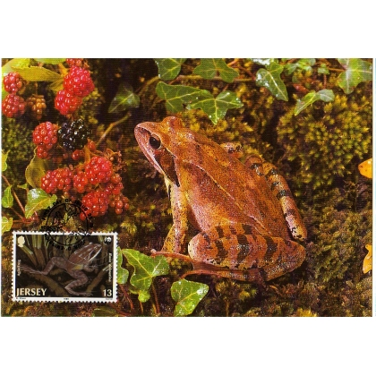 M403 Agile Frog Jersey WWF Maximum card