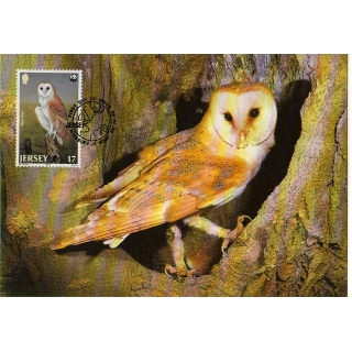 M402 Barn Owl Jersey WWF Maximum card