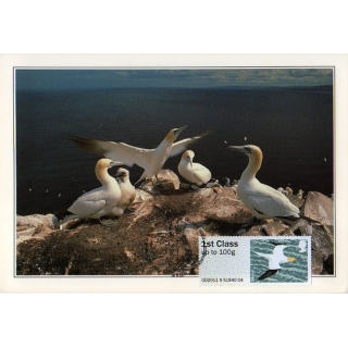 3224 Gannet maximum card