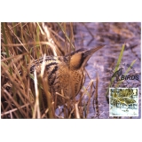 2768 Bittern bird maxi-card 2007