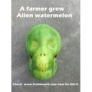 Alien watermelon
