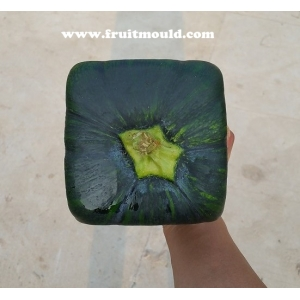 how to make Square shape pumpkins with square watermelon mold