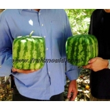 square watermelon on sale in many market