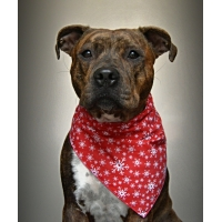 Mini Red Snowflake Christmas Bandana