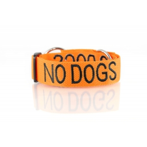 No Dogs Dog Collar