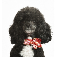 Red Vintage Flower Collar