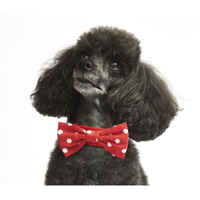 Red Polka Dot Bow Collar