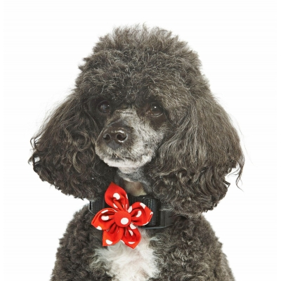 Red Polka Flower Collar Attachment