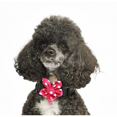 Pink Polka Flower Collar Attachment
