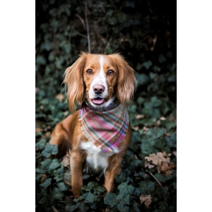 Frayed Foxy In Pink Tweed Bandana - Scamps