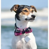 Pink Jersey Plaid Bow Tie