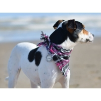 Frayed Pink Chester Bandana - Scamps
