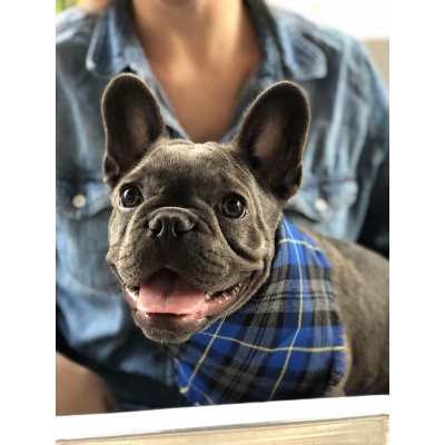 Frayed Kings Royal Blue Plaid Bandana - Scamps