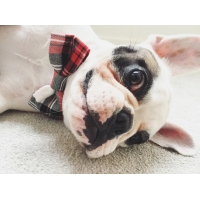 Alfies Red & White Plaid Bow Tie