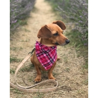 Pink Plaid Bandana M/L