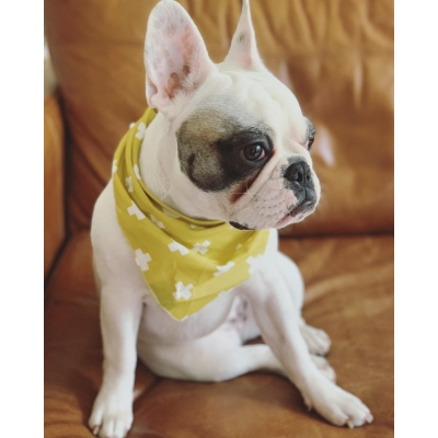 Mustard Yellow Cross Bandana